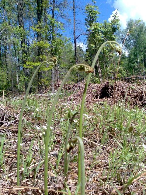 целебные травы от глистов и паразитов