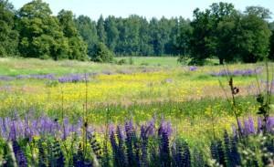 лесные растения,полезные растения,целебные свойства растений,свойства растений