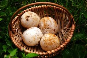 фото яиц весёлки